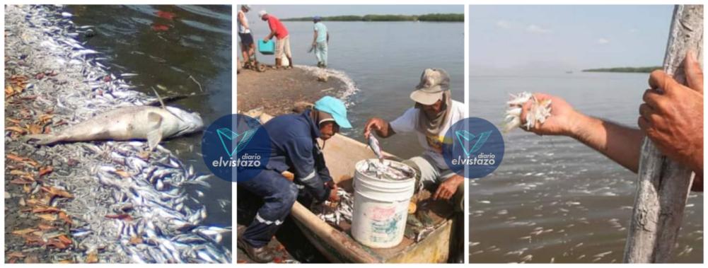 Peces muertos en Anzoátegui: Contaminación y sequía acaban ecosistema en Píritu